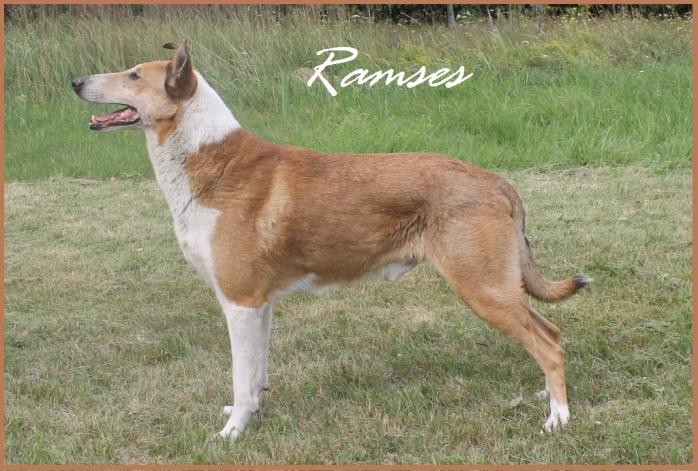 Ramses 6,5 years