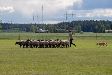 """Lifedream Stop The Livestock """"Puuma"""""""