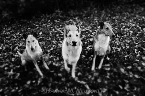 Puuma, Jukka & Miina