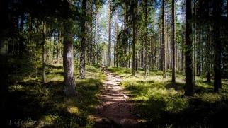 Metsän siimeksessä