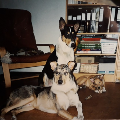 Ensimmäiset koirani Frodo, Sam ja Bilbo