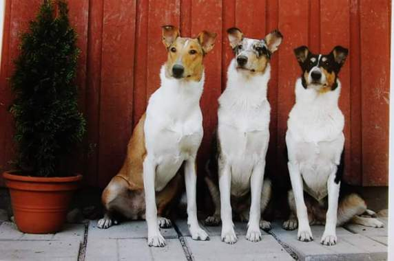 Kantakoiriani: Alda, Rosie ja Mette