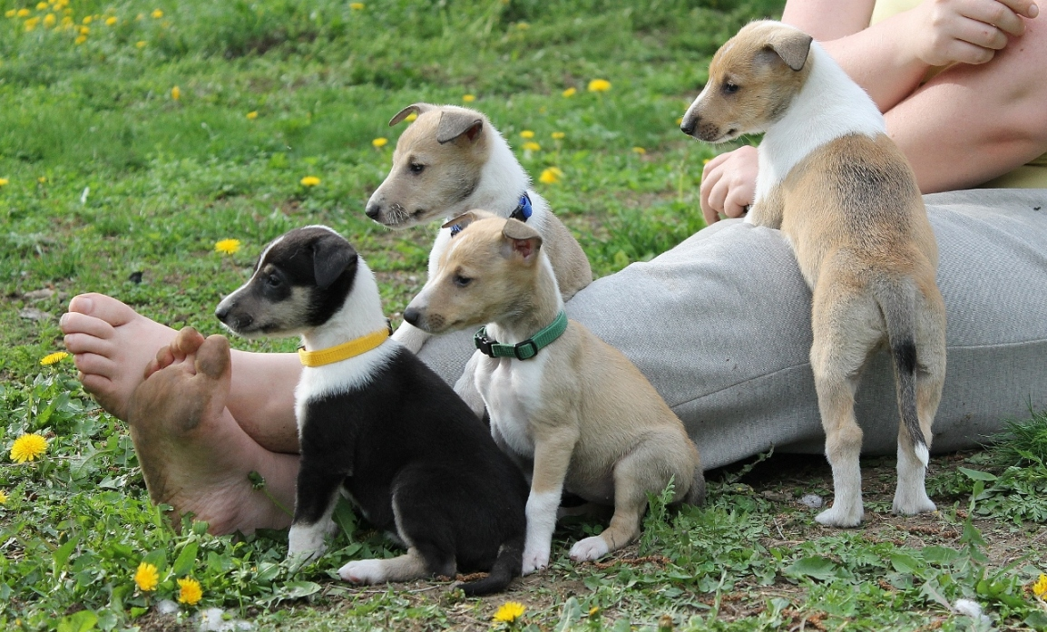 Koiran persoonallisuuden kehittyminen kohdusta vanhuuteen, Tiira3.3.2019